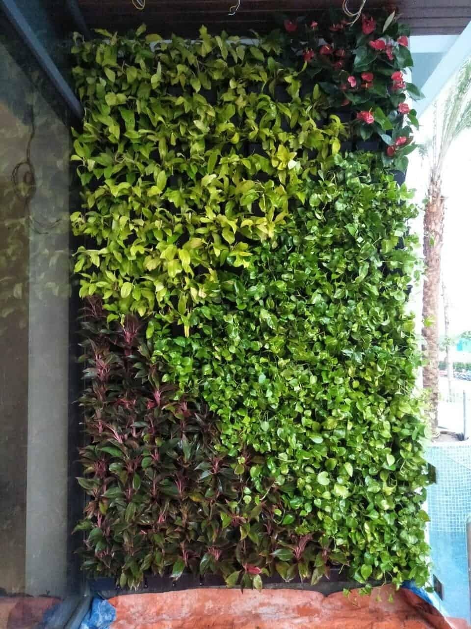 trang trí cỏ trên tường