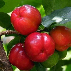cách trồng cây ăn trái trên sân thượng