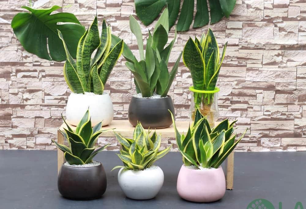 trồng cây ở ban công chung cư