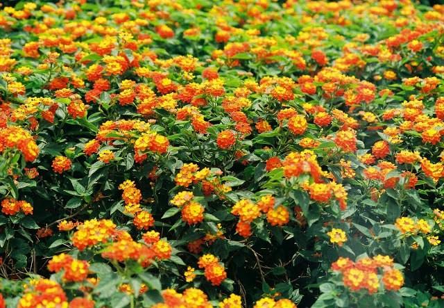 cây trồng bồn hoa công viên
