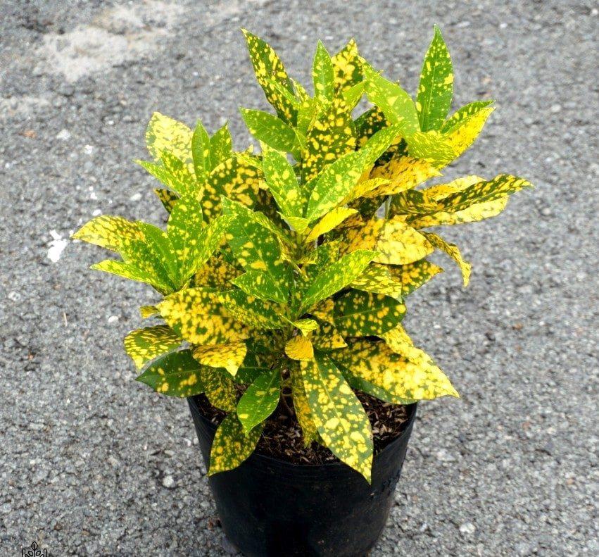 cây trồng viền bồn hoa