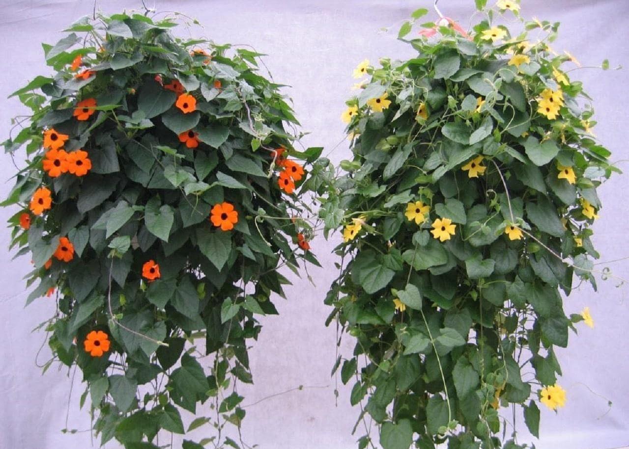 cây trồng ban công chung cư